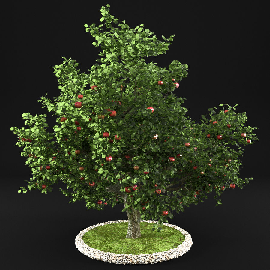 Apple Tree 10 royalty-free 3d model - Preview no. 3