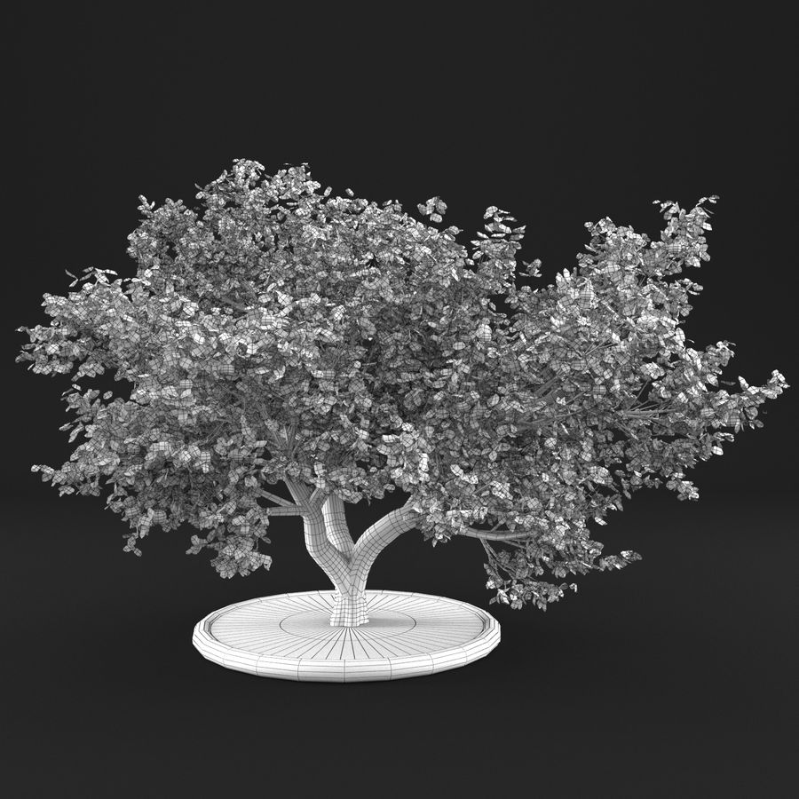 Apple Tree 10 royalty-free 3d model - Preview no. 14