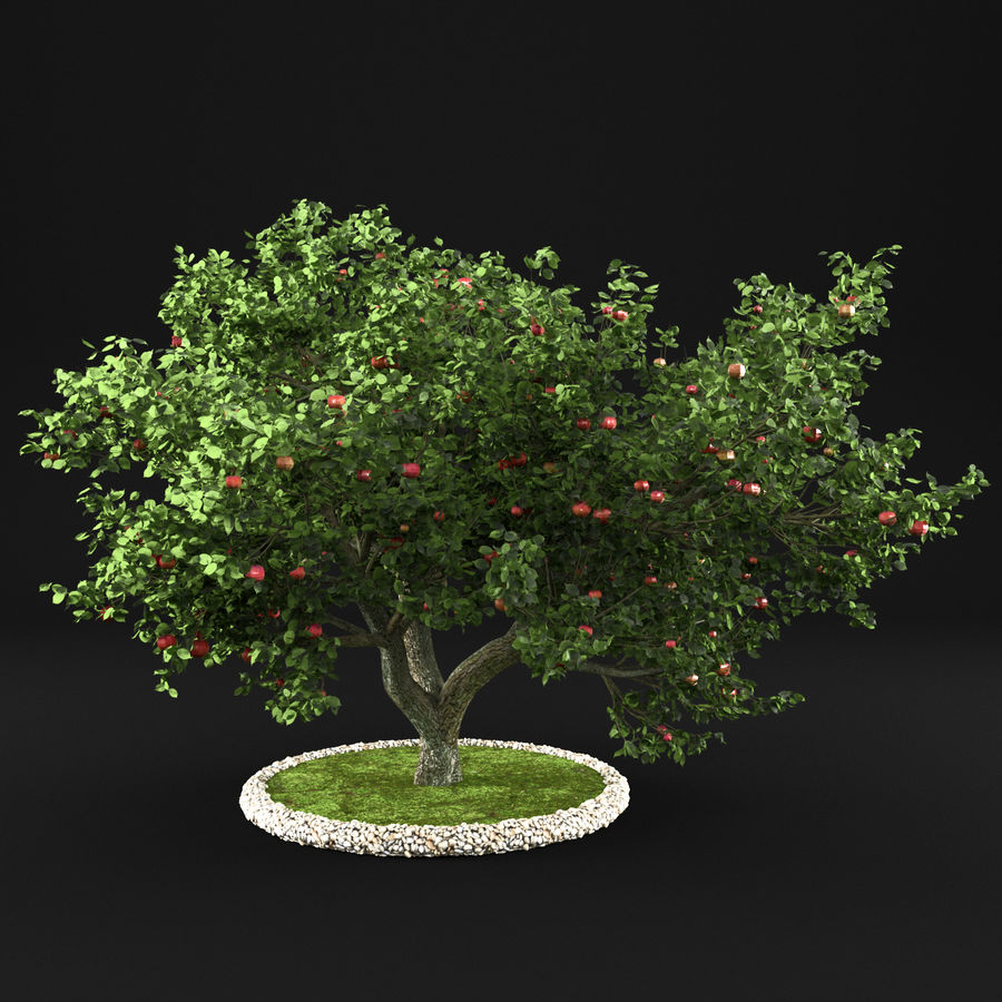 Apple Tree 10 royalty-free 3d model - Preview no. 6