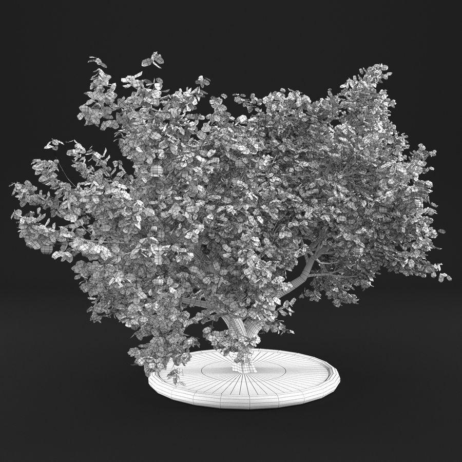 Яблоня 10 royalty-free 3d model - Preview no. 16