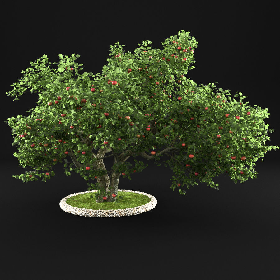 Apple Tree 11 royalty-free 3d model - Preview no. 6