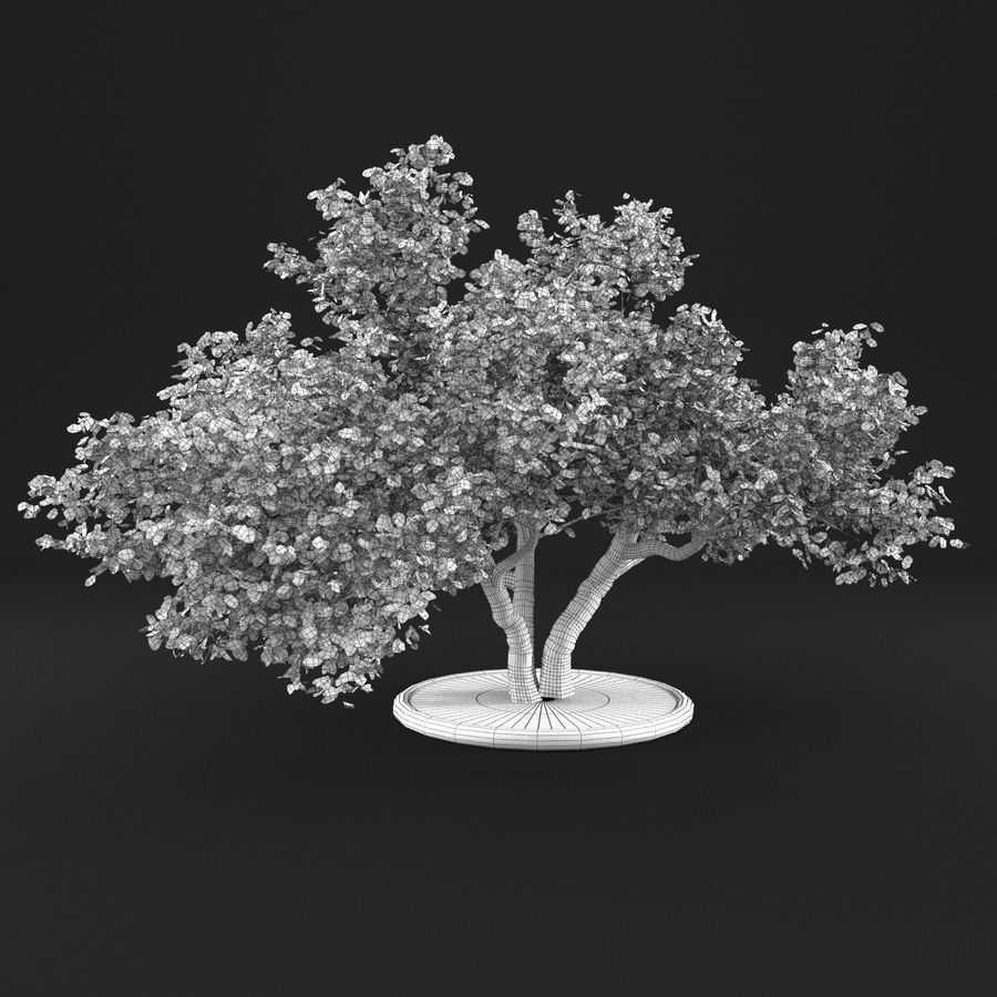 Apple Tree 11 royalty-free 3d model - Preview no. 14