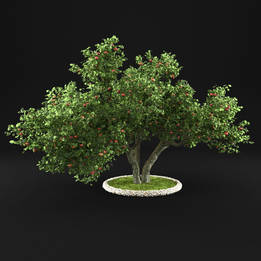 Apple Tree 11 royalty-free 3d model - Preview no. 8