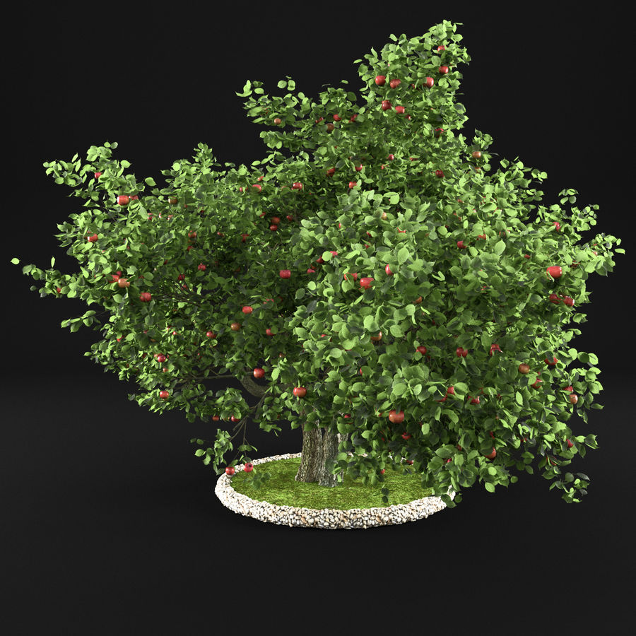 Apple Tree 11 royalty-free 3d model - Preview no. 7
