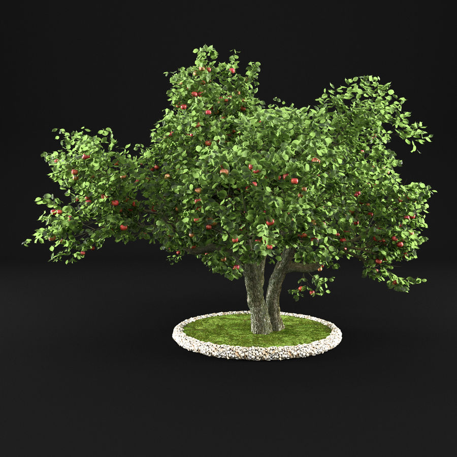 Apple Tree 11 royalty-free 3d model - Preview no. 3