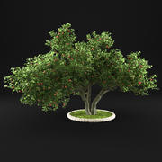 Apple Tree 11 3d model