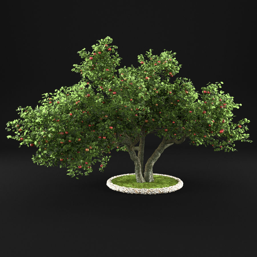 Apple Tree 11 royalty-free 3d model - Preview no. 1