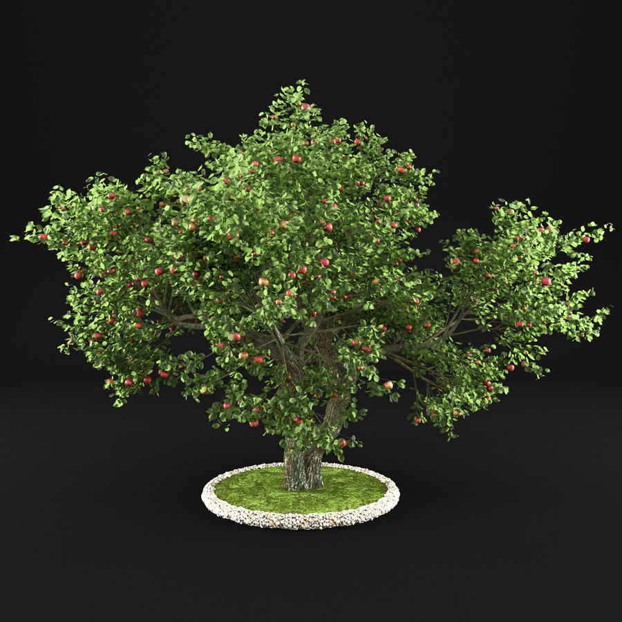 苹果树12 royalty-free 3d model - Preview no. 8
