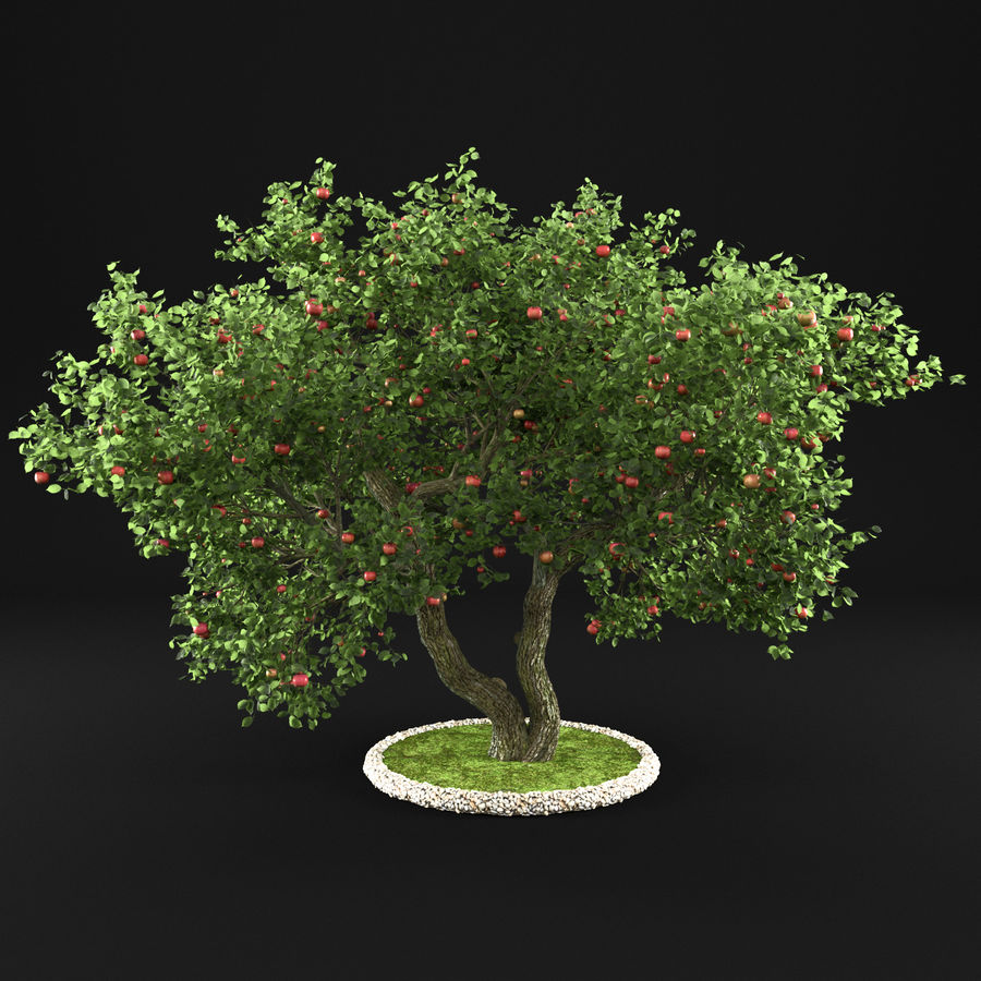 苹果树12 royalty-free 3d model - Preview no. 5