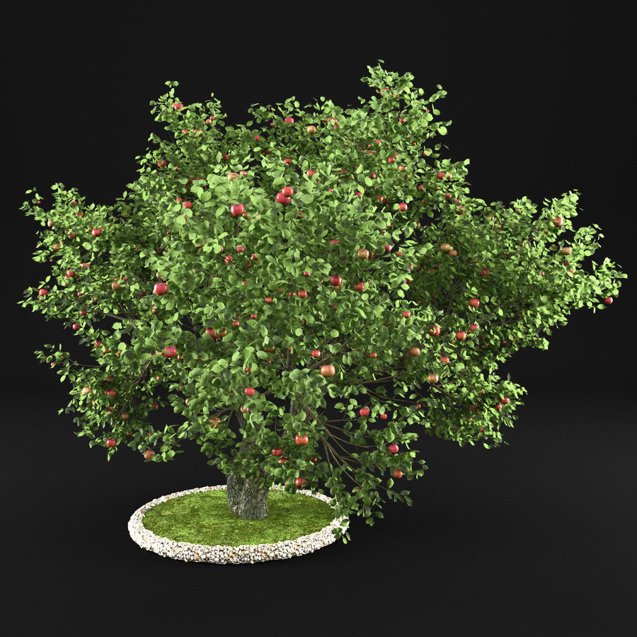 苹果树12 royalty-free 3d model - Preview no. 2