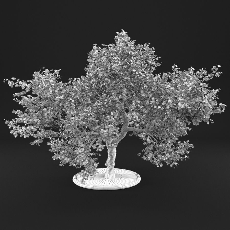 苹果树12 royalty-free 3d model - Preview no. 11