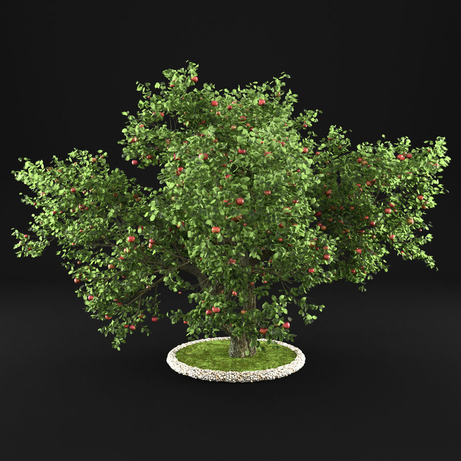苹果树12 royalty-free 3d model - Preview no. 4