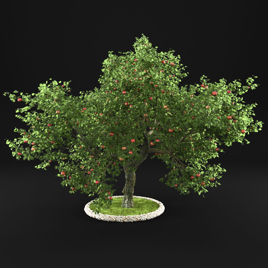 苹果树12 royalty-free 3d model - Preview no. 3