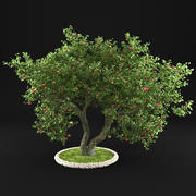 苹果树12 3d model