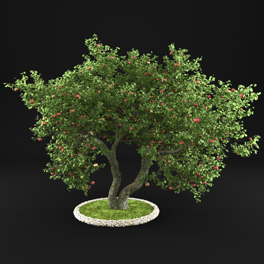 苹果树12 royalty-free 3d model - Preview no. 1