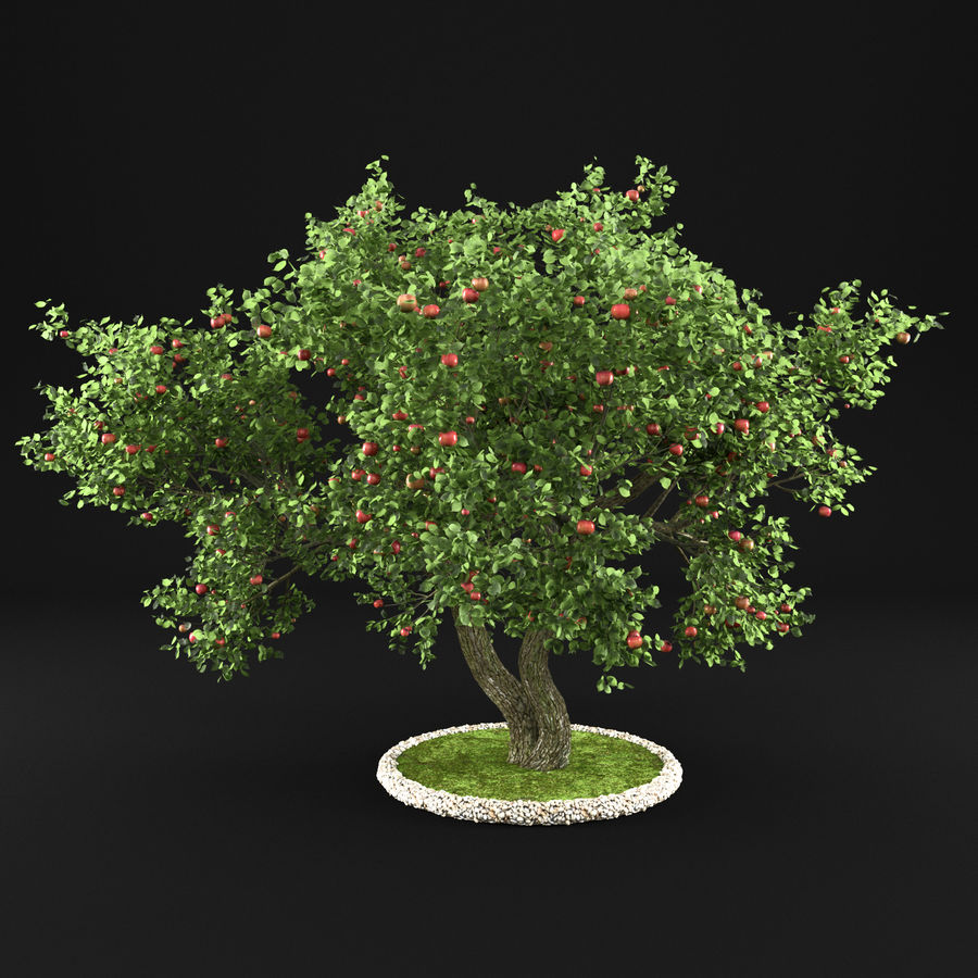 苹果树12 royalty-free 3d model - Preview no. 6