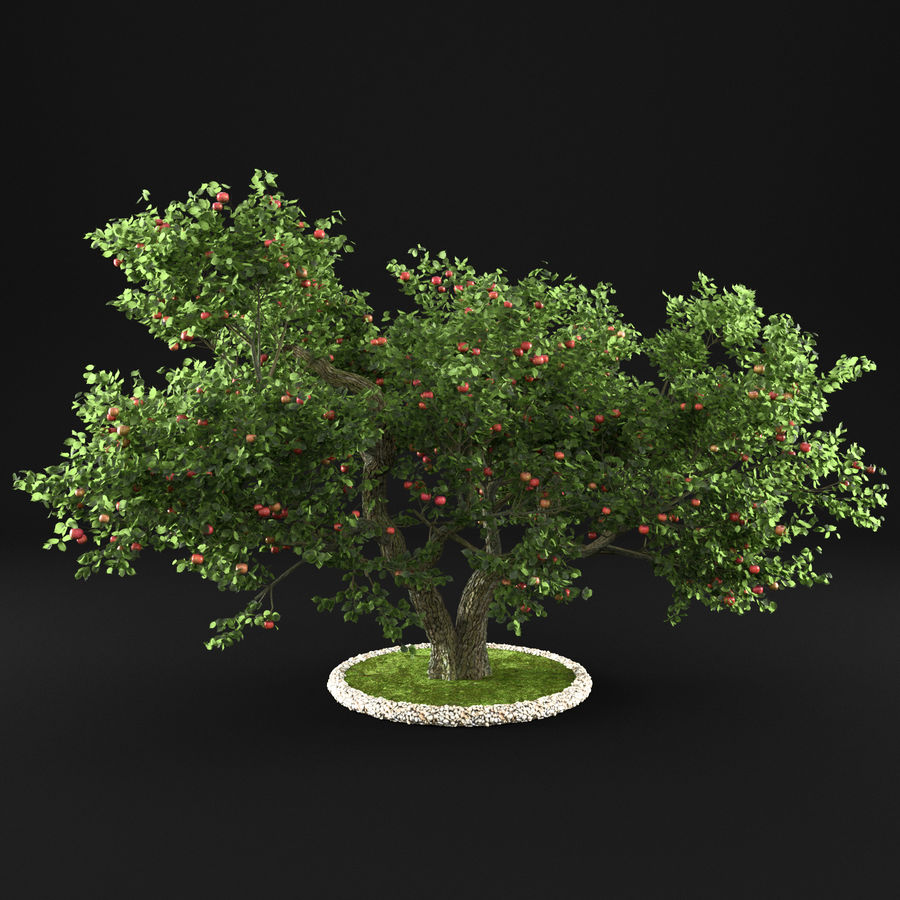 Apple Tree 14 royalty-free 3d model - Preview no. 5