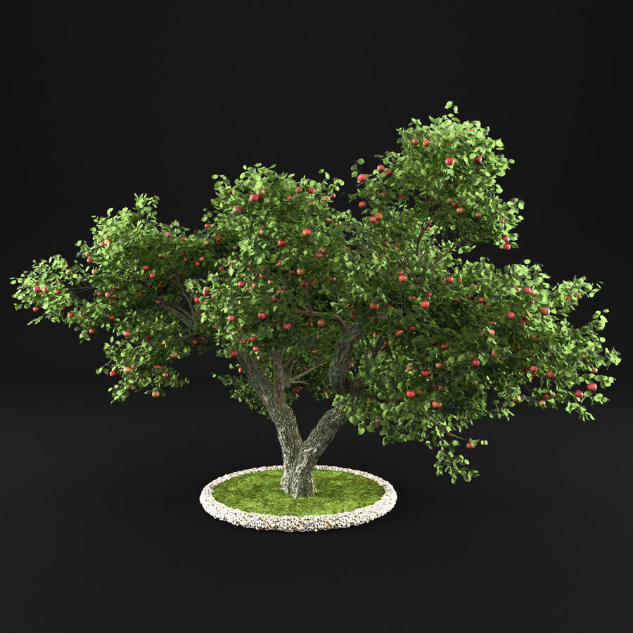 Apple Tree 14 royalty-free 3d model - Preview no. 8