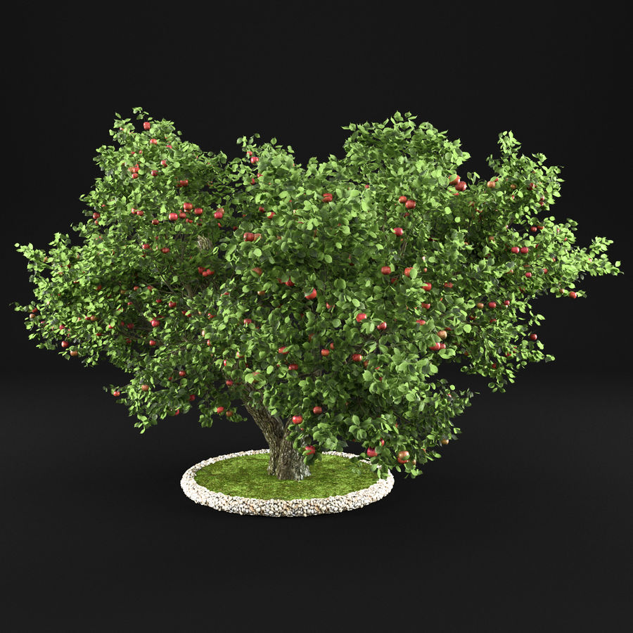 Apple Tree 14 royalty-free 3d model - Preview no. 4