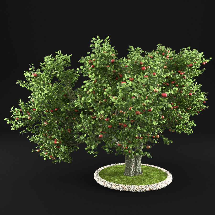 Apple Tree 14 royalty-free 3d model - Preview no. 2
