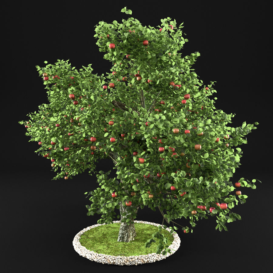 Apple Tree 14 royalty-free 3d model - Preview no. 7