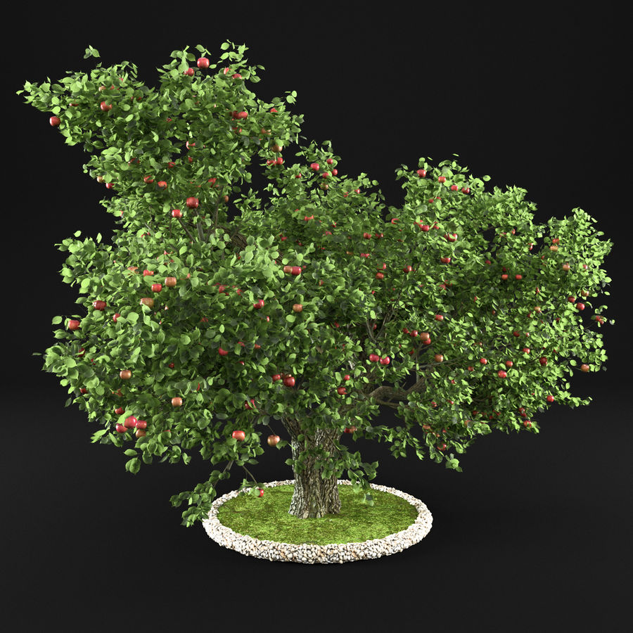 Apple Tree 14 royalty-free 3d model - Preview no. 6