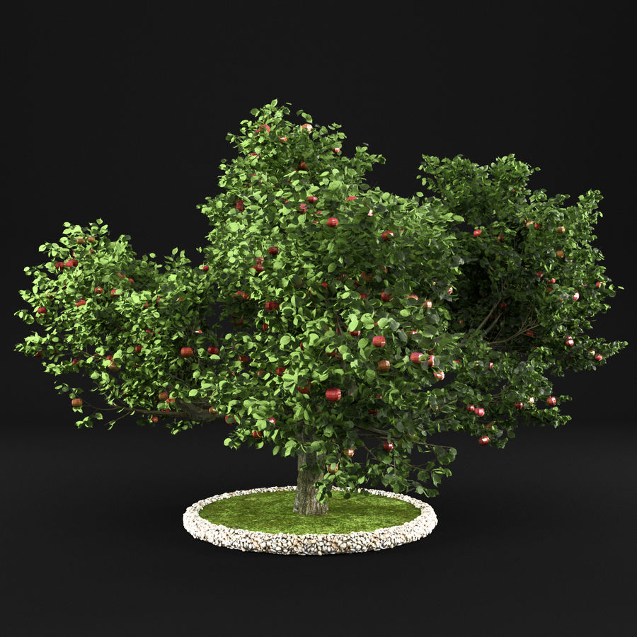 Apfelbaum 15 royalty-free 3d model - Preview no. 8