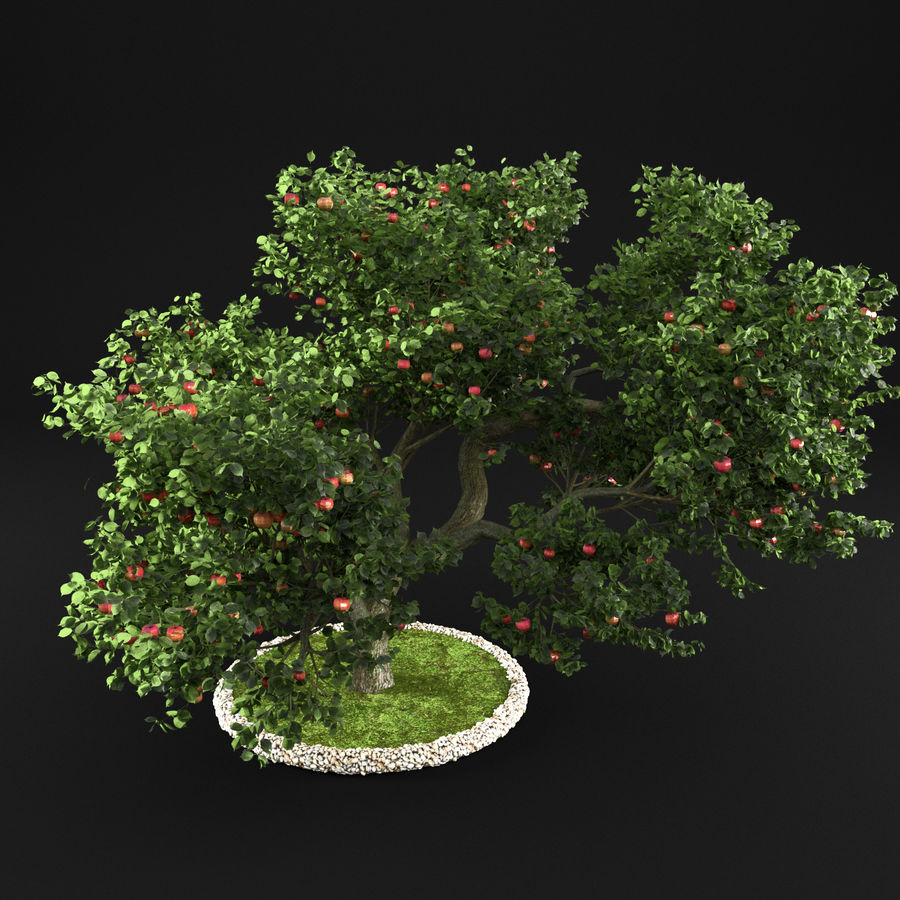 Apfelbaum 15 royalty-free 3d model - Preview no. 9