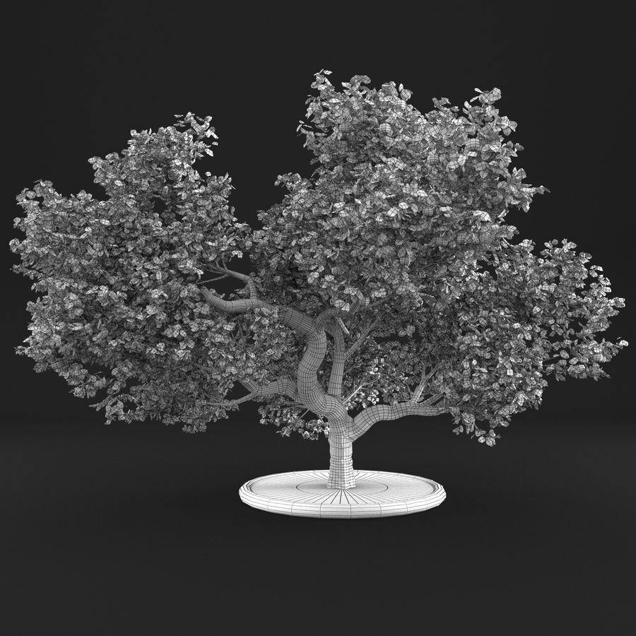 Macieira 15 royalty-free 3d model - Preview no. 13
