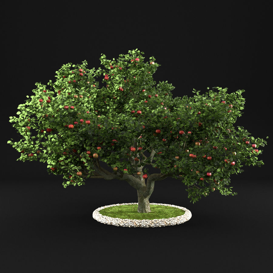 Apfelbaum 15 royalty-free 3d model - Preview no. 7
