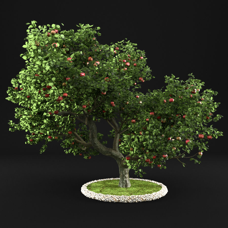 Macieira 15 royalty-free 3d model - Preview no. 5