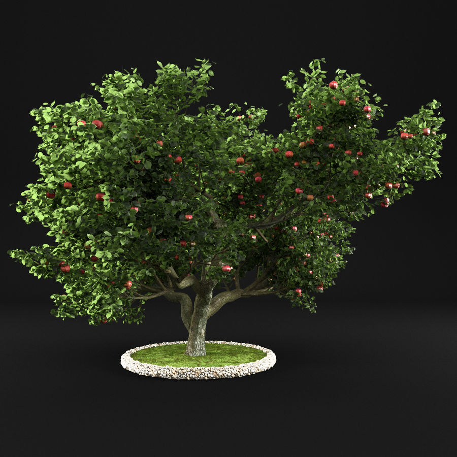 Macieira 15 royalty-free 3d model - Preview no. 4