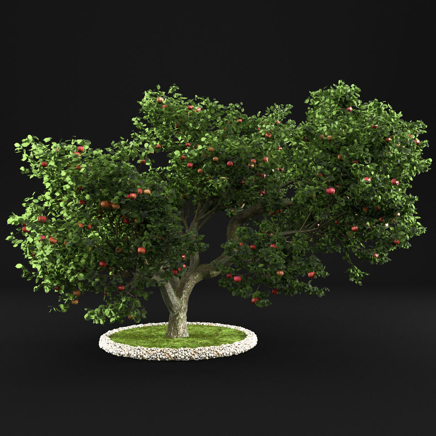 Apfelbaum 15 royalty-free 3d model - Preview no. 2