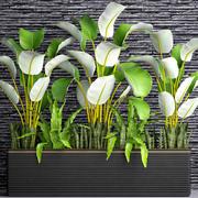 Rośliny zbierające 3d model