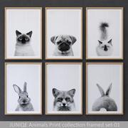 JUNIQE Animals Print collection framed set-01 3d model