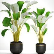 Koleksiyon bitkiler muz 3d model