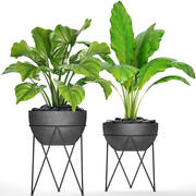 Plants collection pot 3d model
