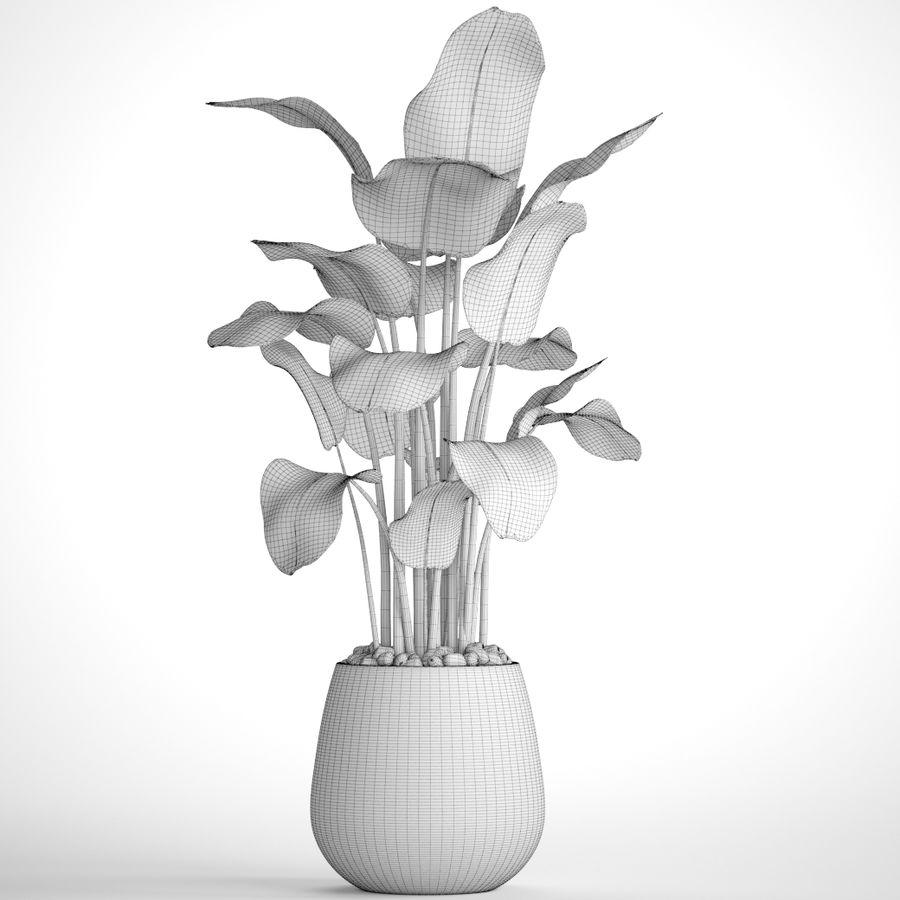 plants banana royalty-free 3d model - Preview no. 10