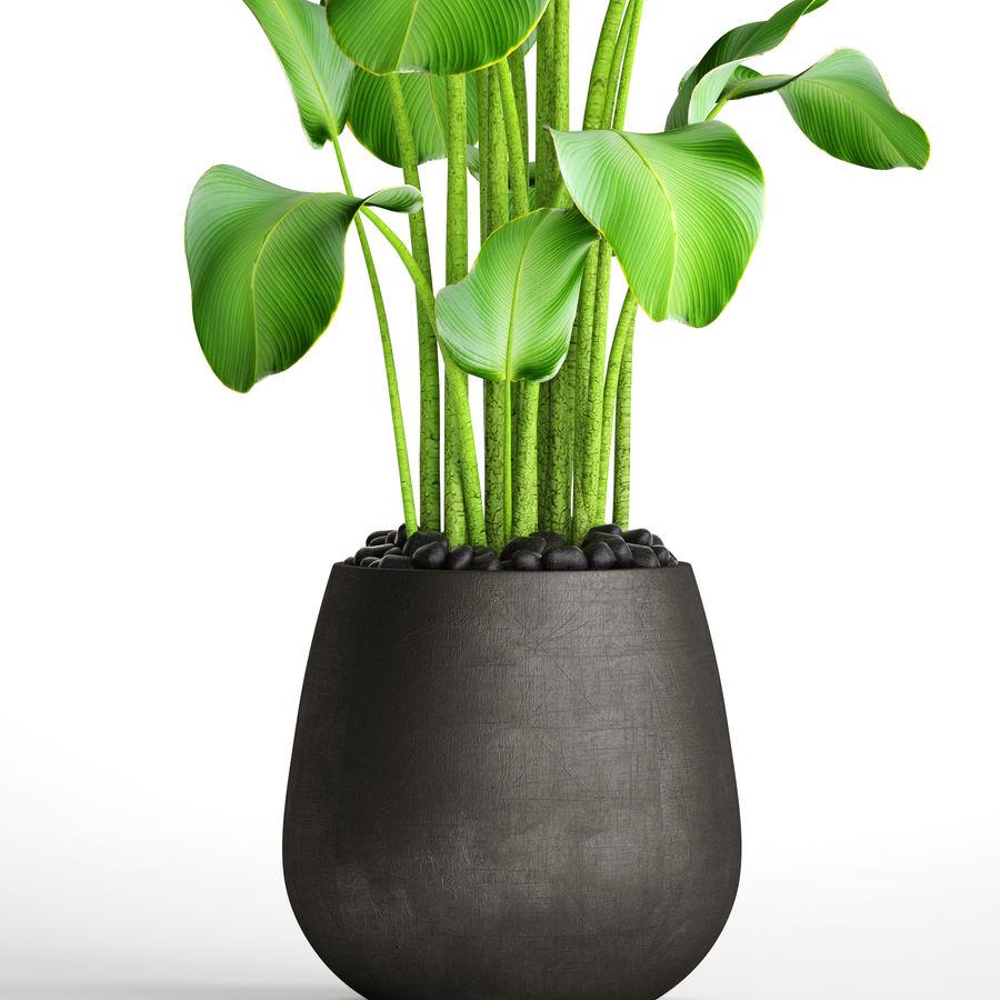 plants banana royalty-free 3d model - Preview no. 6