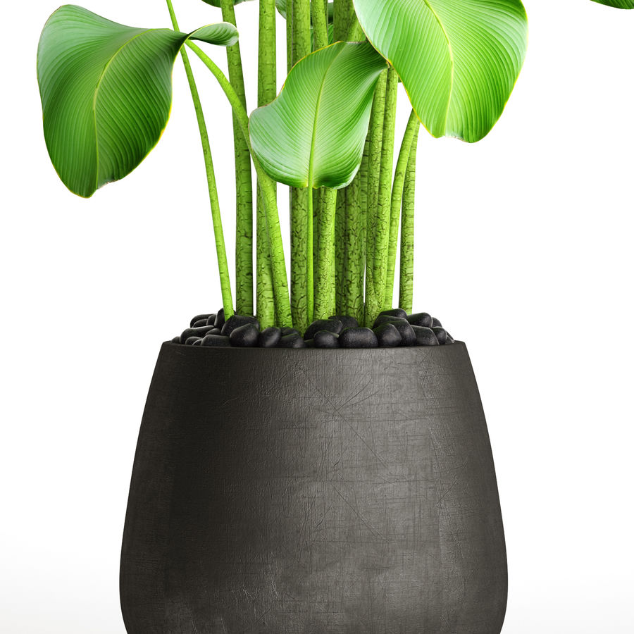 plants banana royalty-free 3d model - Preview no. 3