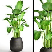 plantes banane 3d model
