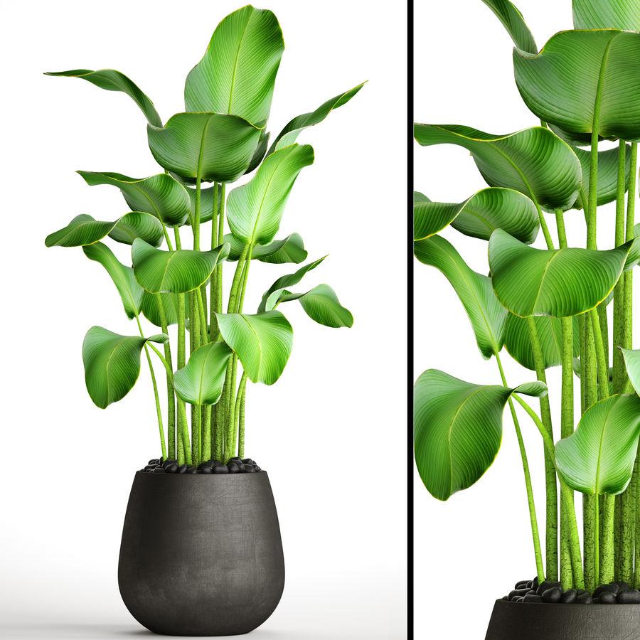 plants banana royalty-free 3d model - Preview no. 1