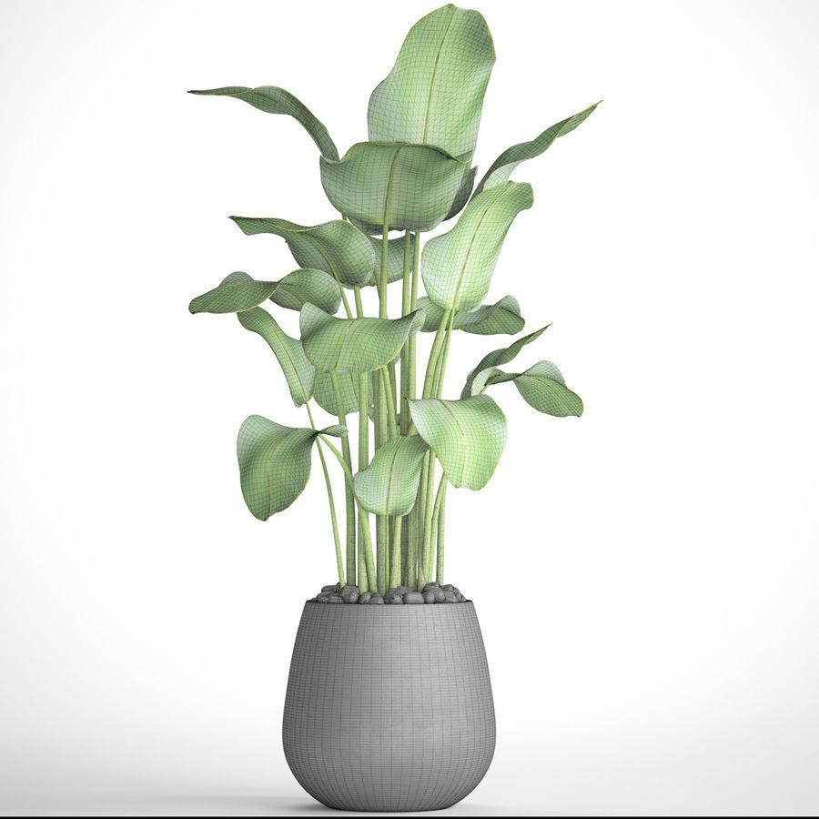 plants banana royalty-free 3d model - Preview no. 7