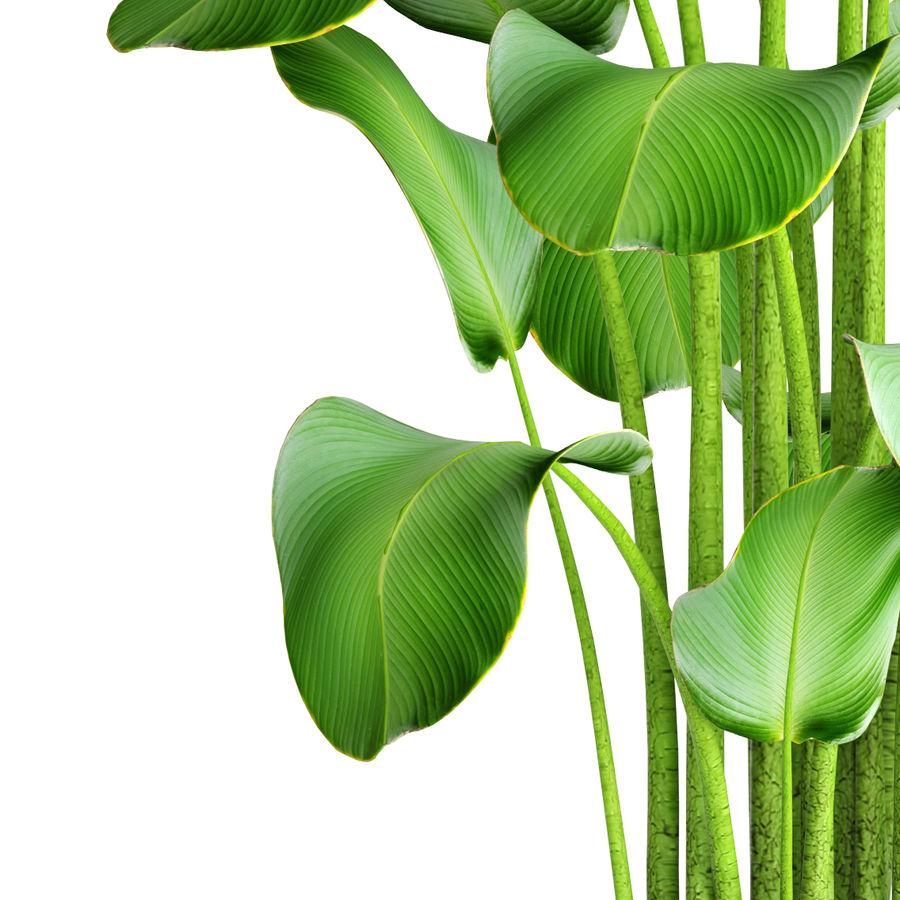 plants banana royalty-free 3d model - Preview no. 5