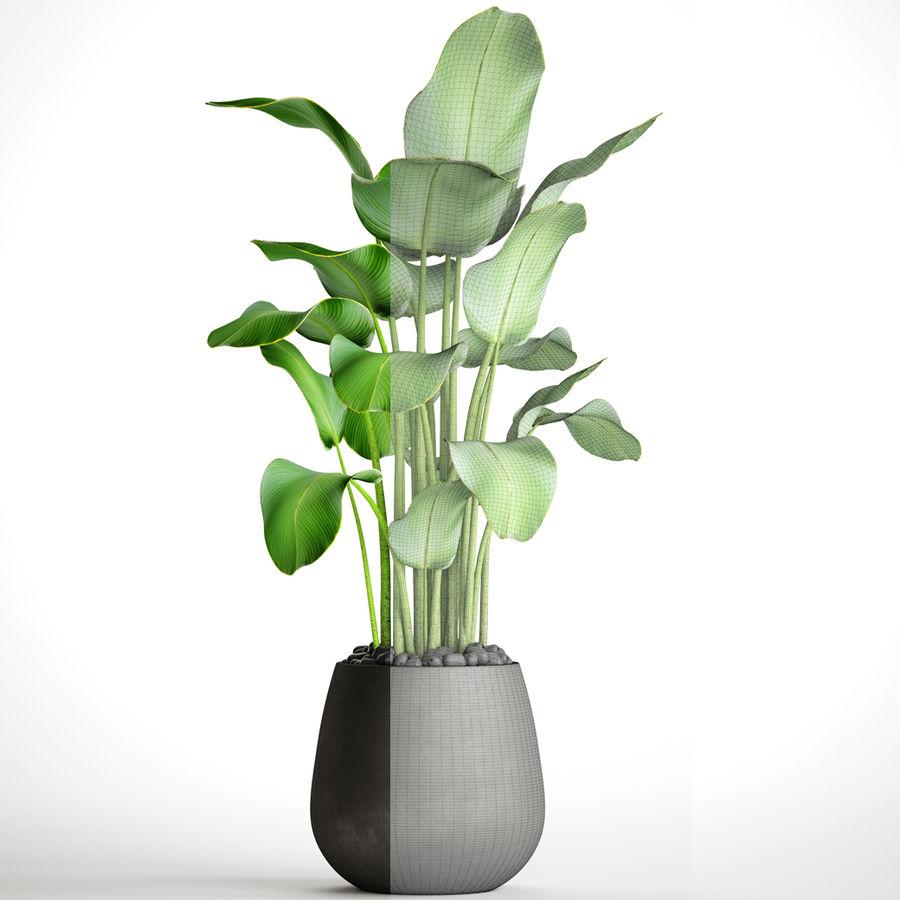 plants banana royalty-free 3d model - Preview no. 8