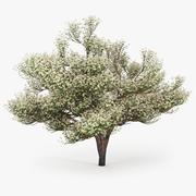 꽃 사과 나무 3d model
