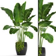 바나나 나무 (3) 3d model