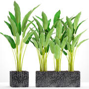 Samling växter banan 3d model