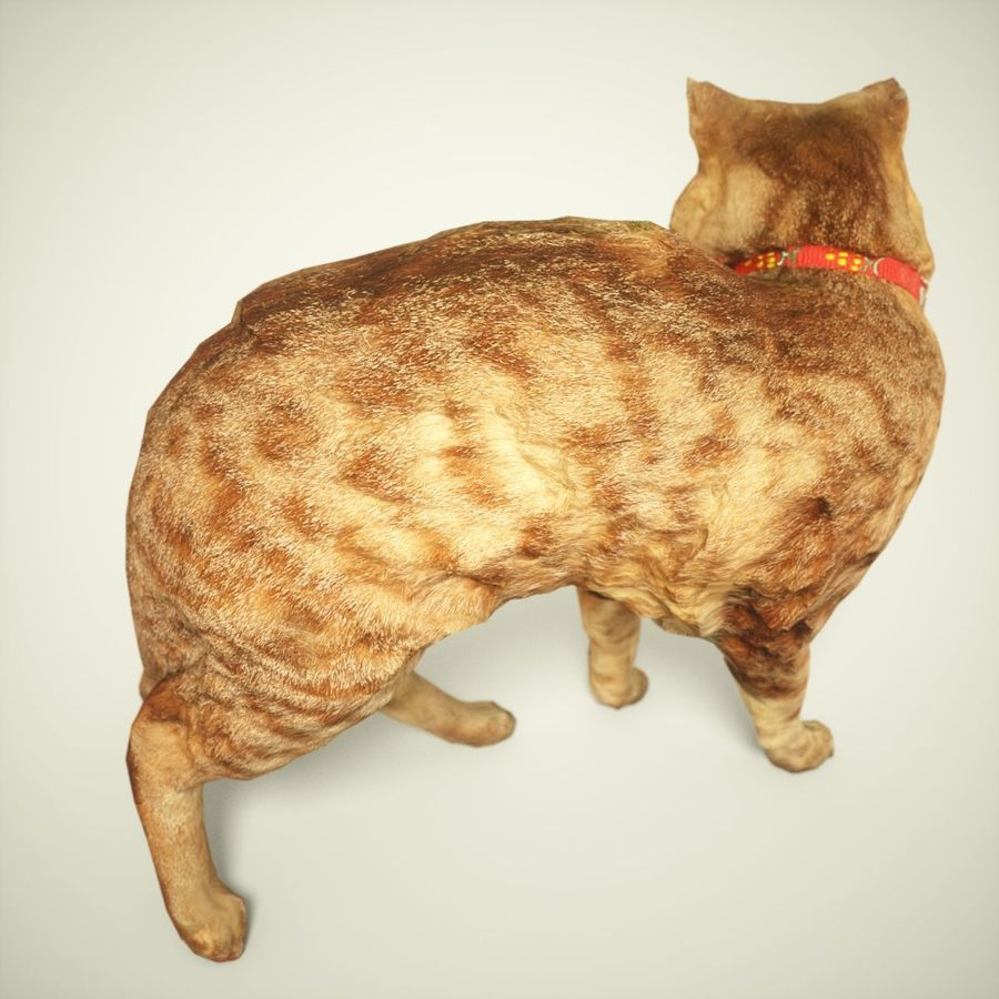 猫模型 royalty-free 3d model - Preview no. 3