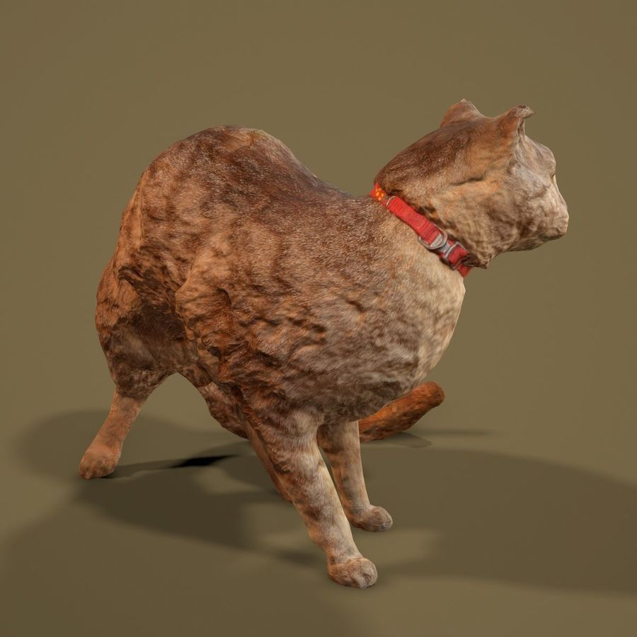 猫模型 royalty-free 3d model - Preview no. 8